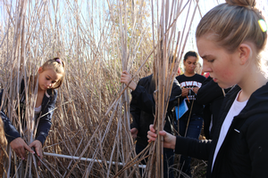 Four students stand in a wetland and measure density of Phragmites in a designated area.